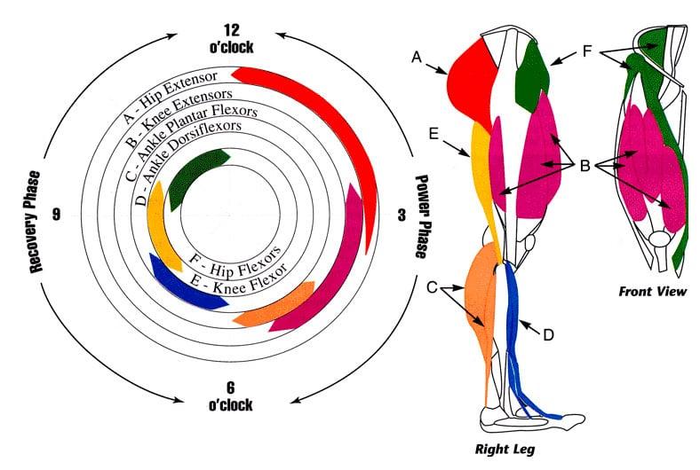 Biomecánica del pedaleo