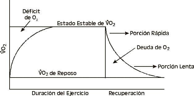 Fase de recuperación aeróbica