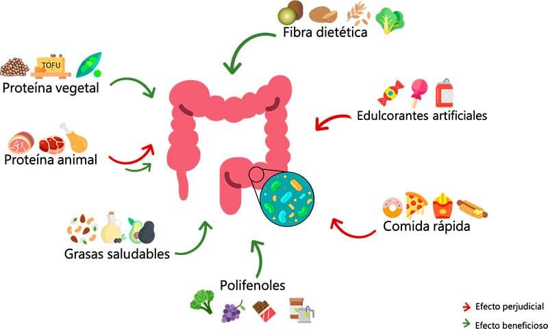 Dieta y microbiotica